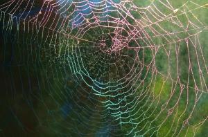 spider-web-615272_1280